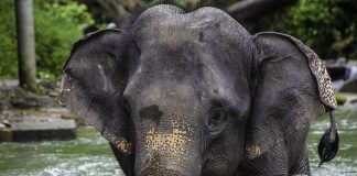 "3 Suspects,"" Says Kerala Chief Minister On Killing Of Pregnant Elephant: 10 Points"