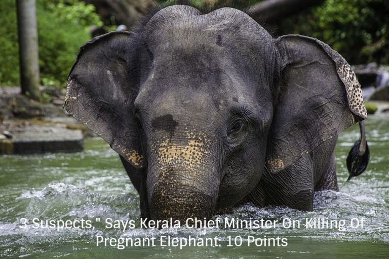"""3 Suspects,"""" Says Kerala Chief Minister On Killing Of Pregnant Elephant: 10 Points"""